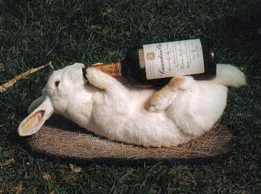 bunny beer