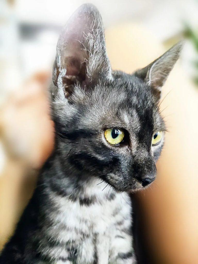 adopt3